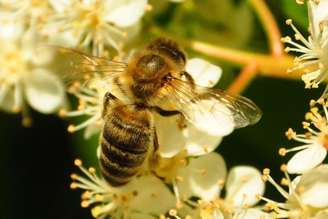 Bienen, Rosenknospen, Brennholz und schmiedeeiserne Tische - Fundstücke bei einem Spaziergang ... Fotos: Brigitte Stolle