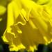 Spring Beauty - Beauté printanière