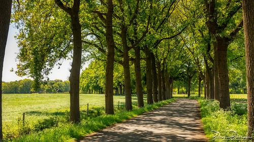 Raamschoorseweg Breda