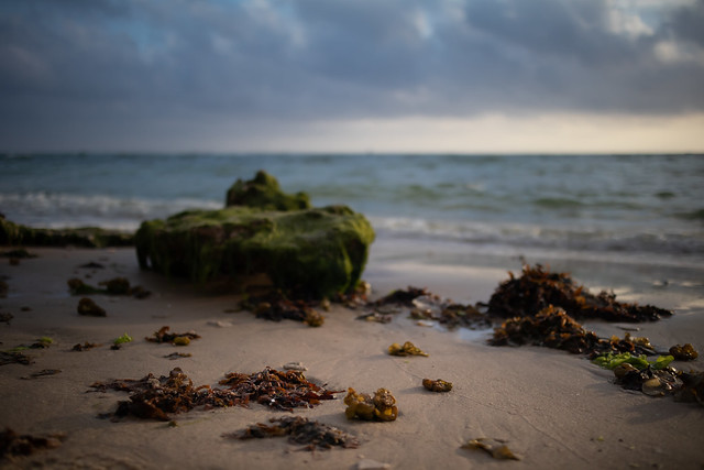 (Sea) weed