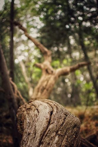 trees forest leaves bokeh bark shallow depthoffield dof profundidaddecampo pointofview pov spring promenade woods bosque tlalpan ciudad mexico city nikon d7100 35mm nikkor lens f18 snapseed thecure rubén rodrigo fotografía