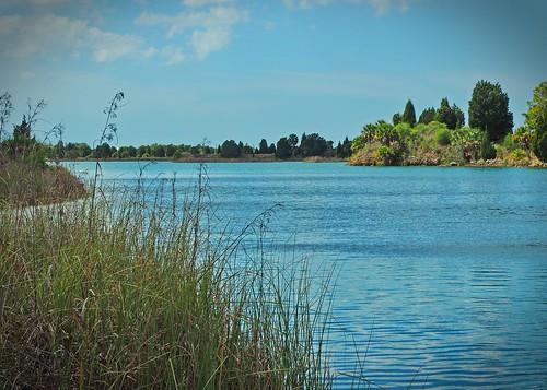 florida water lake nature naturereserve grass trees springhill unitedstates