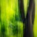 Waldfarben