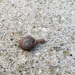 Northside snails