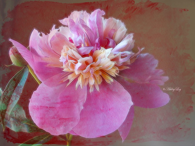 I equate peonies with love because they're the first blooms of summer.