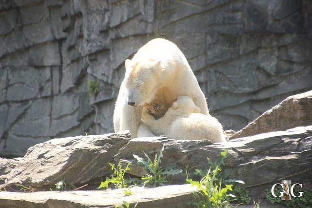Besuch Tierpark Friedrichsfelde 19.05.201958