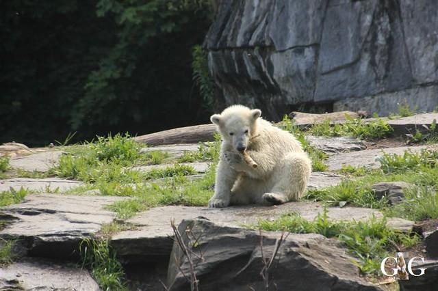 Besuch Tierpark Friedrichsfelde 19.05.201940