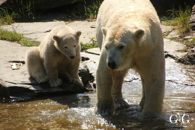 Besuch Tierpark Friedrichsfelde 19.05.201955