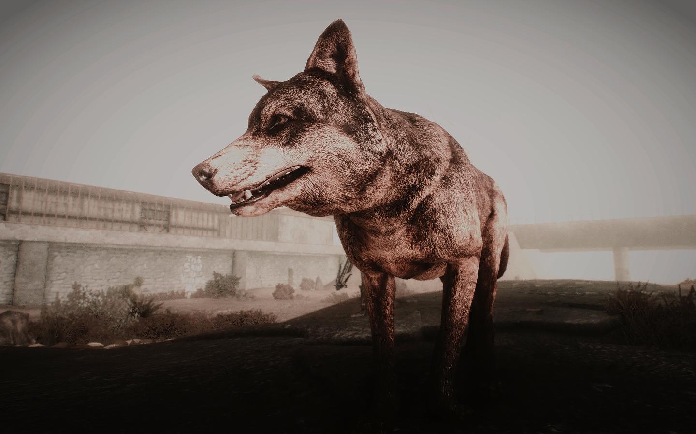 Fallout Screenshots XIII - Page 43 40937891533_5b3c78269a_o