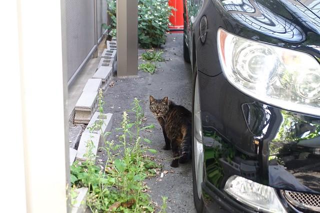 Today's Cat@2019-05-22