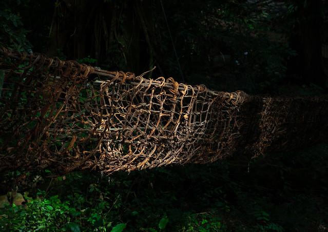 Liana bridge in the forest, Tonkpi Region, Man, Ivory Coast