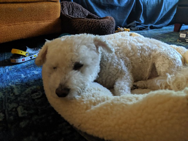 May 22: In the dog bed