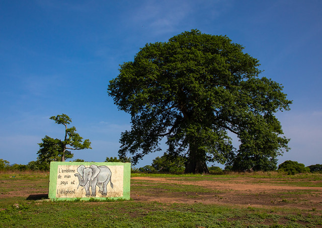 Mural with an elephant in front of a large tree, Denguélé, Korondougou, Ivory Coast