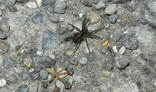 Spider DSCN9616