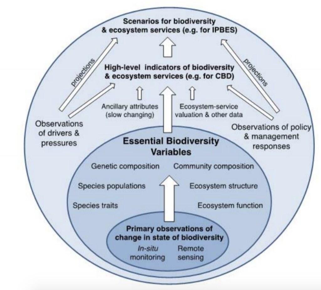 資料庫分成幾個層級,從最基礎的觀測資料、基本生物多樣性變數(EBVs)到高階指標。圖片來源:GEO BON