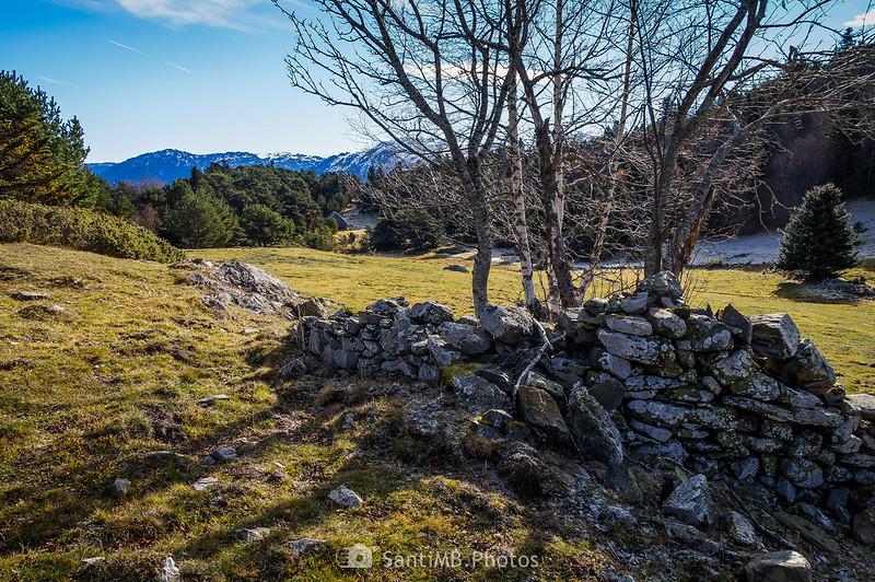 Árbol en antiguo muro de piedra en la Piusa