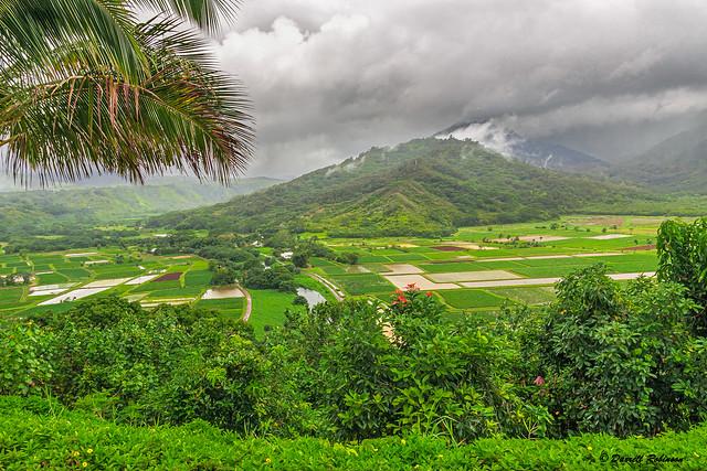 Hanalei Valley Taro Fields