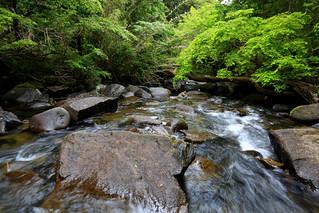 Huerquehue National Park - Pucon, Chile
