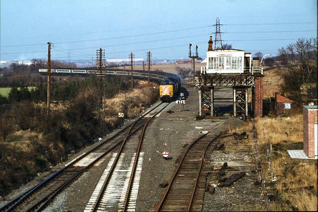 Class 55 no. 55014 @ Penshaw, Tyne & Wear, 08/02/1981 [slide 8177]