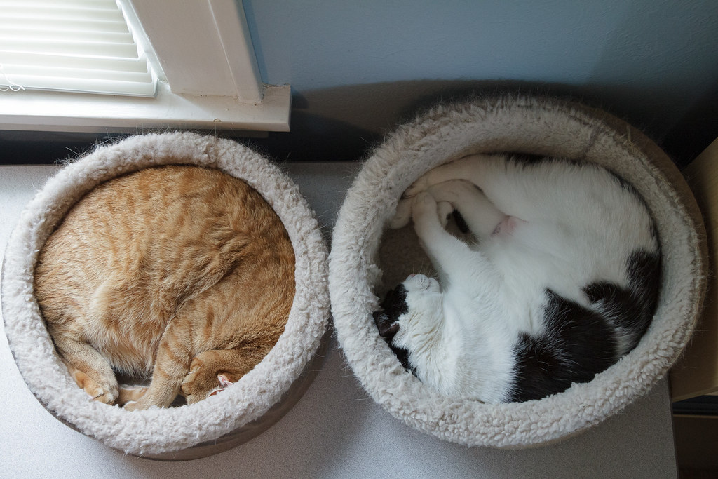 Our cats Sam and Scout curled up in their heated cat beds in May 2012