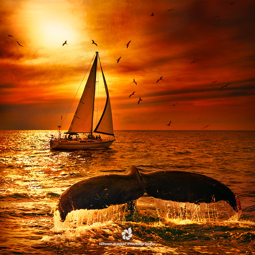 Sailing with the Whales