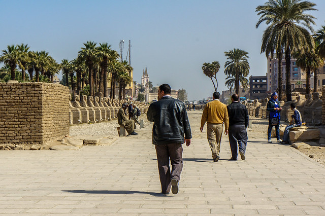 Luxor temple's avenue of the sphinxes