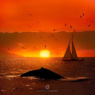 The Immortal Sea