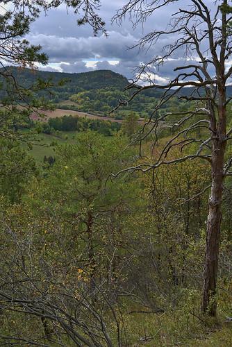 deutschland landschaft rudolstadt wald schaala pörzberg forest woods thuringia thüringen