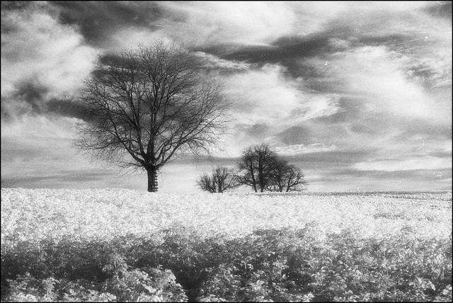 Infrared Landscape (2)