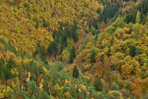 badblankenburg deutschland landschaft wald schwarzatal werretal thuringia thüringen darktable autumn herbst fall trees forest woods