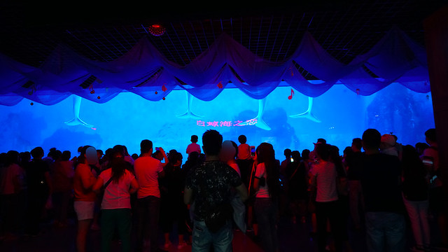 2017 China Cetacean Alliance investigation into Tianjin Haichang Polar Ocean World, China