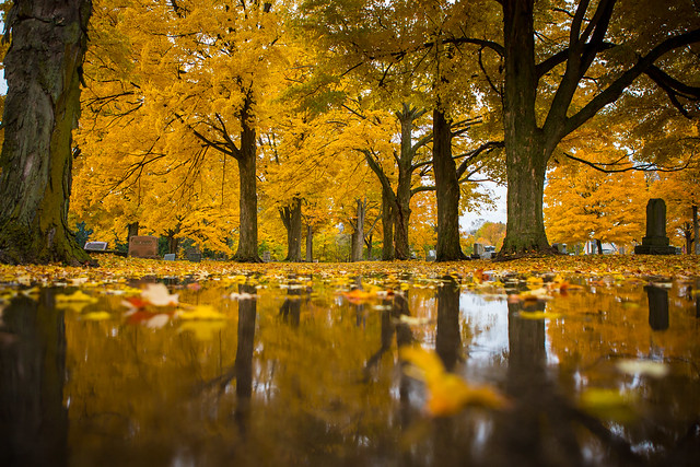 Reflections of fall.