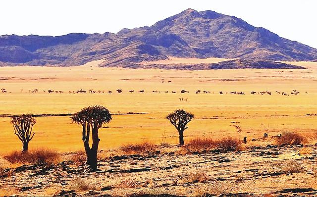 paysage de Namibie, Afrique désertique