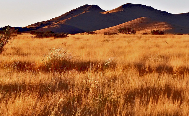 Namibie, savane. Africa at dusk in savannah.