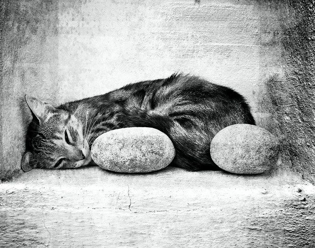 Cat with stones 2-c