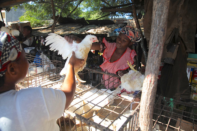 Selling chickens in Maputo's traditional market
