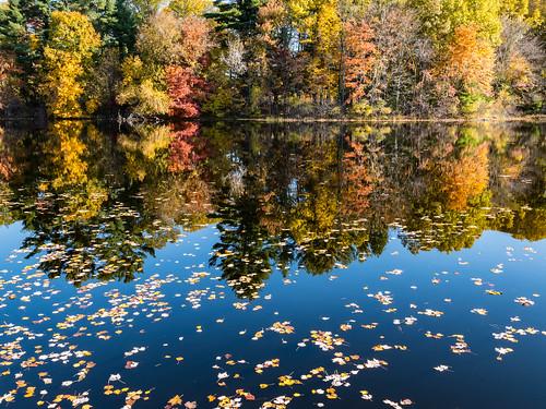 trees lake reflection fall landscape ma unitedstates southborough