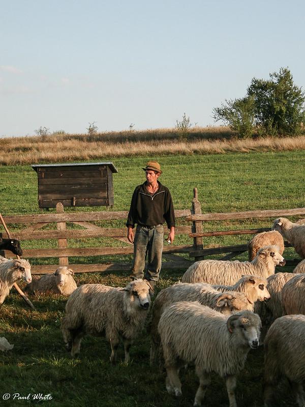 Transhumant Shepherd