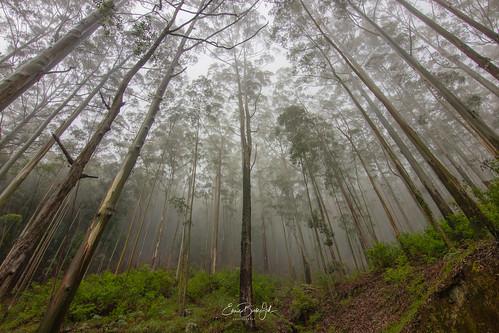 composition landscape travelphotography eos80d tokina fog canon light nature srilanka flickr