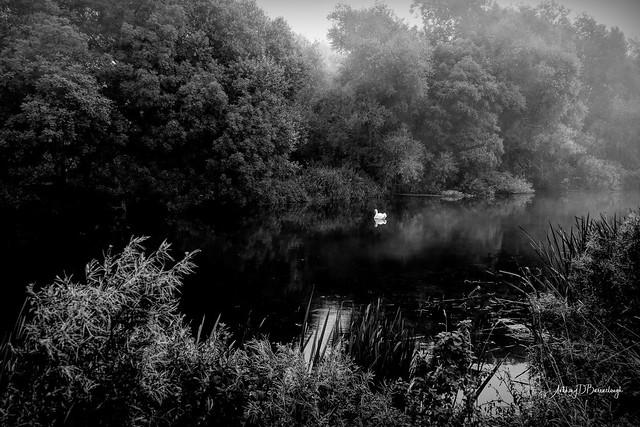 Misty River 672a-1