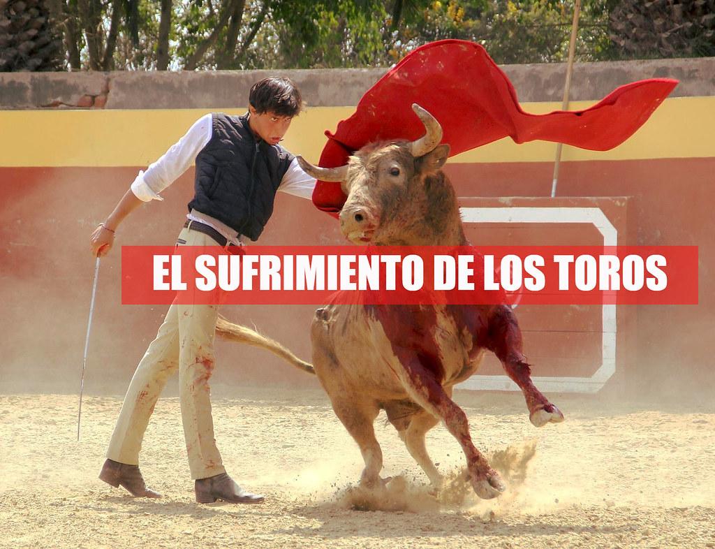 Sufrimiento Corporal de los Toros durante la Corrida