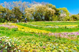 Large flower bed of Satoyama Garden : 里山ガーデン大花壇 | by Dakiny