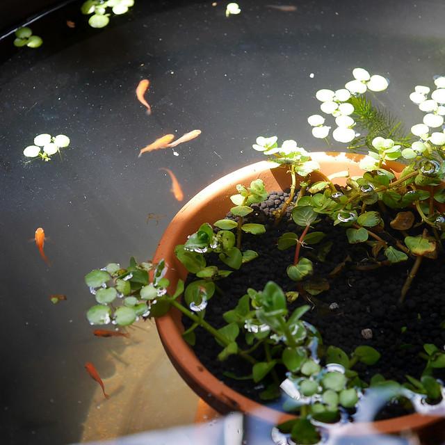 1080x1080 Mini Pond 0415