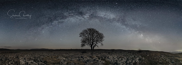 The Lone Tree and the Milky Way