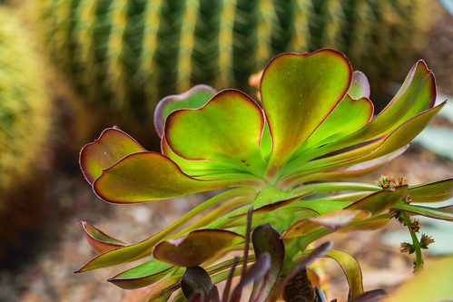 Desert Abstract | by Nikon Guy 56