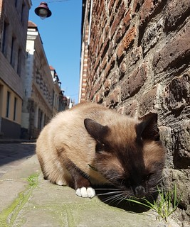 Herbe à Chat, rue coquerez à Lille | by nadinedewinter