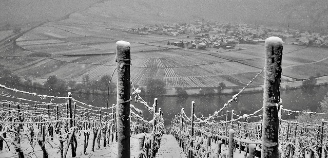 Mosel in the snow