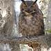 In the Presence of an Owl by Mark Schocken