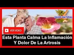 Con Esta Planta Calmara La Inflamación Y El Dolor Provocado Por La Artrosis