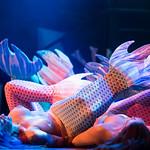 Hubba Hubba Revue: Undersea Burlesque